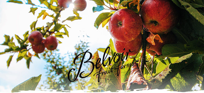 Belvoir Fruit Farms