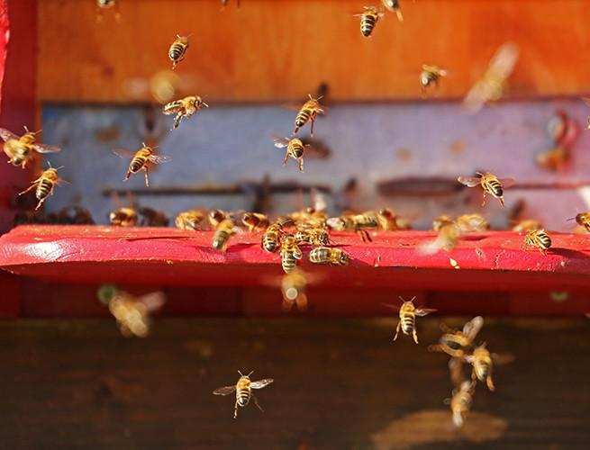 Organic Bee Keepers