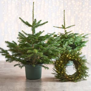 Christmas Trees and Lit Wreath Set